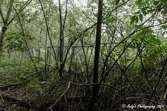 IMG_7149 (ydnA uaL) Tags: istana woodneuk