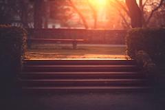 The Stairs (Gure Elia) Tags: park parque sunset backlight stairs contraluz atardecer dof dusk ocaso pamplona escaleras taconera pdc irua canoneos5dmarkii