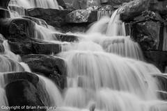 IMGP1189 (acornuser) Tags: park trees blackandwhite bw reflection water woodland garden landscape waterfall spring surrey cascade virginiawater blosom sigma1770 pentaxk3