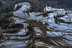 *Tiger Mouth Terrace* (albert.wirtz) Tags: china asien yunnan riceterraces yuanyang ostasien d810 terracedfields reisterrassen laohuzui tigermouth nikond810 albertwirtz nikkor70200f40vr