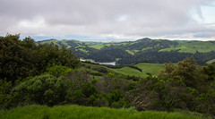 San Pablo Reservoir View - Tilden Regional Park - Contra Costa County - California - 19 March 2016 (goatlockerguns) Tags: sanfrancisco california park county usa costa west nature oakland coast san view natural unitedstatesofamerica pablo reservoir bayarea eucalyptus eastbay concord contra regional tilden eucalyptustree
