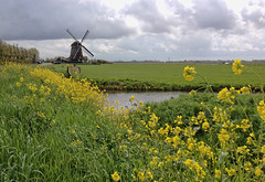 groeten-uit-uitgeest (Don Pedro de Carrion de los Condes !) Tags: dutch molen hollands landschap iphone donpedro d700