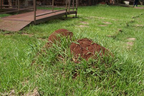 Big termite mound