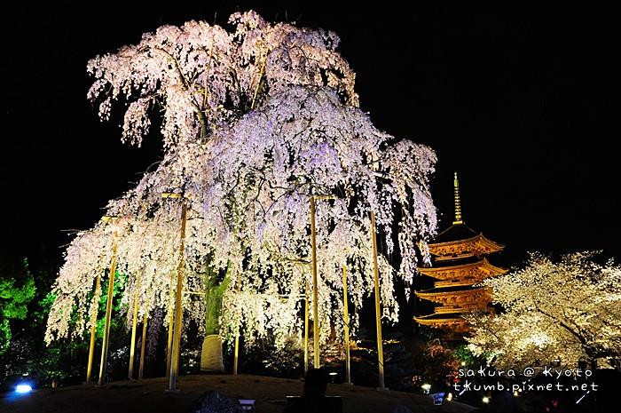 2014東寺夜櫻 (5).jpg