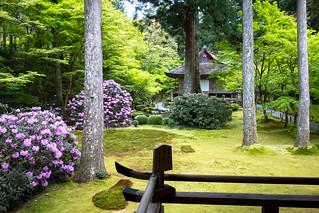 石楠花 - 三千院 / Sanzen-in Temple