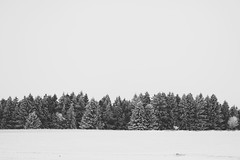 This Is a True Story (desomnis) Tags: winter blackandwhite bw snow nature monochrome forest woodland landscape landscapes blackwhite woods snowy monochrom landschaft minimalistic winterland minimalist mhlviertel landscapephotography bhmerwald bohemianforest canon6d canon135mmf20 desomnis