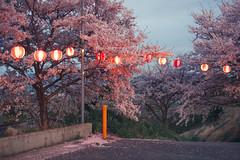 (igu3) Tags: japan sakura nara