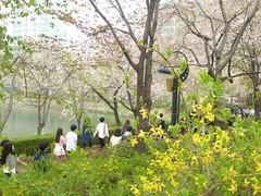 C16-Seoul-Parc Seokcho(17) (jbeaulieu) Tags: seoul coree parc seokcho