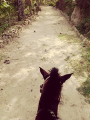 Way (kathe (Ledy)) Tags: nature way caballo camino natural hourse