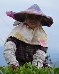 Alishan, Tainan (Lost in Kaohsiung) Tags: asia taiwan teaplantation alishan teapicker