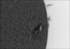 HAlpha View of AR2529 - Negative (Manifest Stephanie) Tags: sun storm solar spot negative astrophotography coronado sunspot qhy ar2529