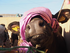P4162058 (t_y_l) Tags: morocco marokko tinghir suq 2016 tinerhir