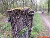 "2016-04-30   Lentetocht  (klim) wandeling 40 Km  (8) • <a style=""font-size:0.8em;"" href=""http://www.flickr.com/photos/118469228@N03/26748182245/"" target=""_blank"">View on Flickr</a>"