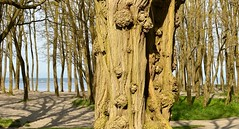 (Reed 1949) Tags: seattle sky beach water nikon pugetsound washingtonstate goldengardenspark tamron18270mm nikond5200
