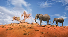 Elephants on Parade (ShutterJack) Tags: africa trees elephant hot grass lunch outdoors nikon eating parade savannah arid grazing jameshale jimhale shutterjack