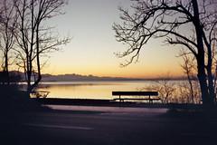 The bench (MSC_Photography) Tags: sunset lake alps color reflection water bench gold evening abend duck wasser sonnenuntergang kodak bokeh ducks bank chrome 200 electro alpen 35 enten ente spiegelung gs yashica chiemsee 45mm chrom 117 f17 yashinon