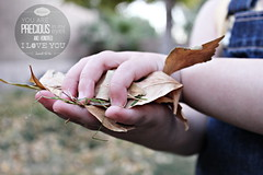 Toddler Playing in the Fall Leaves HI-RES CC (Bible Verse Photo) Tags: november brown cute fall love leaves typography eyes hands toddler child god you faith 4 jesus fingers christian precious bible isaiah scripture 43 oldtestament childlike 434 2015 bibleverse ocotober honored i
