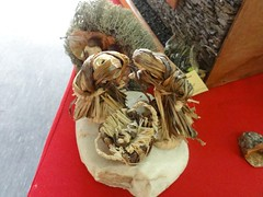 DSC00450 (camaradecoimbra) Tags: portugal natal navidades merrychristmas christmastime painatal sagradafamlia rainhasanta acadmica joyeuxnoel meninojesus queimadasfitas briosa bolasdenatal mercadodpedrov prespiosartesanais artesosdecoimbra burningribbons