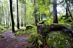 Magical Path (winkler.roger) Tags: landscape austria mellau vorarlberg bregenzerwald mellental