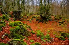 _DSC3588 (andoni.guridi) Tags: winter españa spain enero bosque invierno euskadi oñati gipuzkoa basoa 2016 hayedo negua urtarrila araotz degurixa