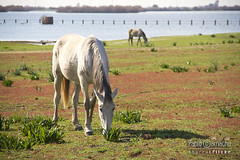 IMG_0387 (Churruk) Tags: verde luz azul caballos sevilla andalucía agua campo animales dehesa