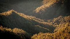 Jungle (ckocur) Tags: mountains mexico town jalisco sierra sansebastian labufa sansebastiandeloeste sierraoccidental
