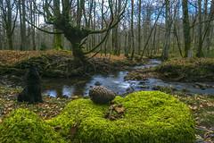 Amboto (abel.maestro) Tags: espaa verde rio sevilla andaluca bosque alava maestro abel bizkaia 34 haya pia hayedo amboto nuttoma