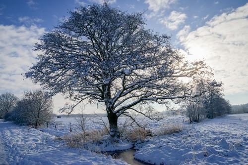 Winterspaziergang 160118 074.jpg