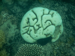 Great Barrier Reef Dec 2015 (i_shudder) Tags: select