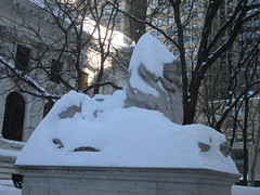 Snow Lions New York Public Library Blizzard 2016 NYC 5835 (Brechtbug) Tags: birthday street new york nyc winter sculpture cats snow storm art public hat weather animal st statue cat real aftermath feline library snowstorm january lion ave elements lions after snowing avenue blizzard 5th 42nd blizzards 2016 braving 01242016