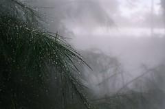 19200014 (Ve~) Tags: film iso400 olympus fujifilm canberra c41 om1n pro400h