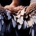 Feather Paradise