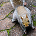 "Squirrel • <a style=""font-size:0.8em;"" href=""http://www.flickr.com/photos/126020042@N08/24458580981/"" target=""_blank"">View on Flickr</a>"