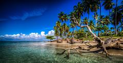 Caribbean Dream Beach (bredsig) Tags: summer sun tree beach water warm dominicanrepublic sunny clear caribbean wishyouwerehere lasterrenas saman