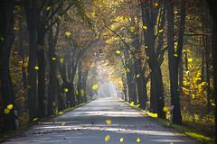 fallende Blätter im Herbst (NPPhotographie) Tags: street autumn tree art fall nature magic leafs oberberg npp allee ceative