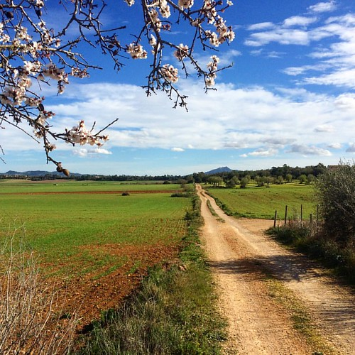 #mallarca early spring #gravelroads blooming trees - nothing ro complain at ;-)