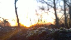 Morning Glory (mcginley2012) Tags: cameraphone morning nature wall sunrise dawn moss lumia1020