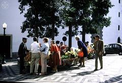 Saudade 594 ( Portimagem) Tags: flowers flores portugal madeira historia funchal patrimnionacional