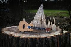 Hfner Concert Ukulele [2] (FHgitarre) Tags: concert ukulele musicalinstrument hofner hfner concertukulele