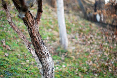 Swirly bokeh (Isko78) Tags: nature nikon bokeh natura 58mm swirly helios