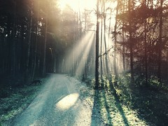 Joy (FlavioSarescia) Tags: road travel trees light dog sun sunlight tree nature sunshine forest landscape switzerland shine walk joy rays roads sunrays iphone
