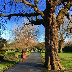 Trees in the Green (Steve-h) Tags: park trees ireland winter girls people dublin sun sunlight men nature boys grass sunshine women path february allrightsreserved 2016 steveh appleiphone6s