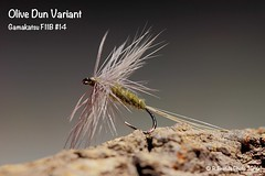 Olive Dun Variant (Roberto PE) Tags: olive flytying