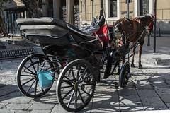 The Rest (@ntomarto) Tags: italy horse relax waiting italia carriage riposo siesta sicily rest palermo carrozza cavallo sicilia attesa antomarto ntomarto