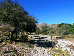 Ikaria's remotest hinterland 36 - on the track of an old handmade motor-road (angeloska) Tags: terrain landscape stream flood hiking ikaria aegean greece february pezi hinterland hikingtrails   langada overgrazing   vrakades  opsikarias