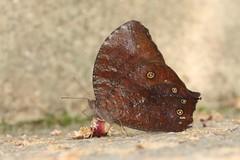 evening brown (moloch05) Tags: malaysia taman negara