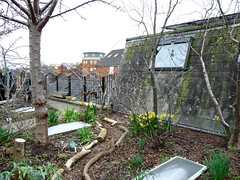 RISC roof garden, March 2016 (2) (karenblakeman) Tags: uk reading march permaculture roofgarden londonstreet 2016 risc forestgarden globalcafe