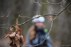 Wald Spaziergang (Sebastian Sperfeld) Tags: wald bume pferd baum reiten tochter