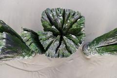 Bergen aan Zee (bas.mohr) Tags: strand bergen duinen castricum pwn schoorl kennemer duinreservaat noordhollandse
