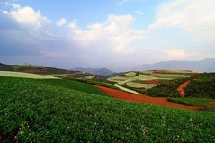 Fields of Dongchuan, Yunnan (adamba100) Tags: life china street city trip travel light boy portrait people woman mountain man color colour cute male men tourism lamp girl beautiful beauty face field female children landscape asian person star town canal kid interesting women asia pretty vietnamese cityscape child play view outdoor hill innocent sightseeing chinese decoration beijing lifestyle style charm korea headshot tourist vietnam ridge mongolia korean human thai innocence mountainside lantern gadget grassland pure channel pendant foothill purity mongolian